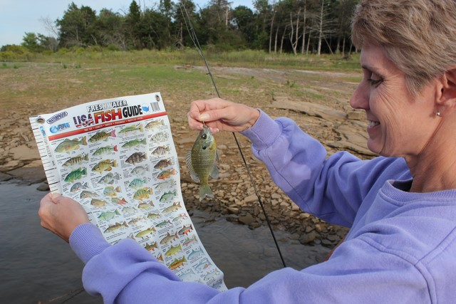 AFN Fishing & Outdoors USA Fish Guide is a waterproof and tear-proof chart with lifelike images of fresh water fish along with edibility, danger, poisonous, protectived species, ruler, length to weight charts and popular knots diagrams.