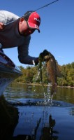 Lake Pickwick fishing guide Tyler Ford grabbing a smallmouth