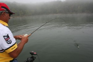 Schooling White Bass On Table Rock Lake With Professional